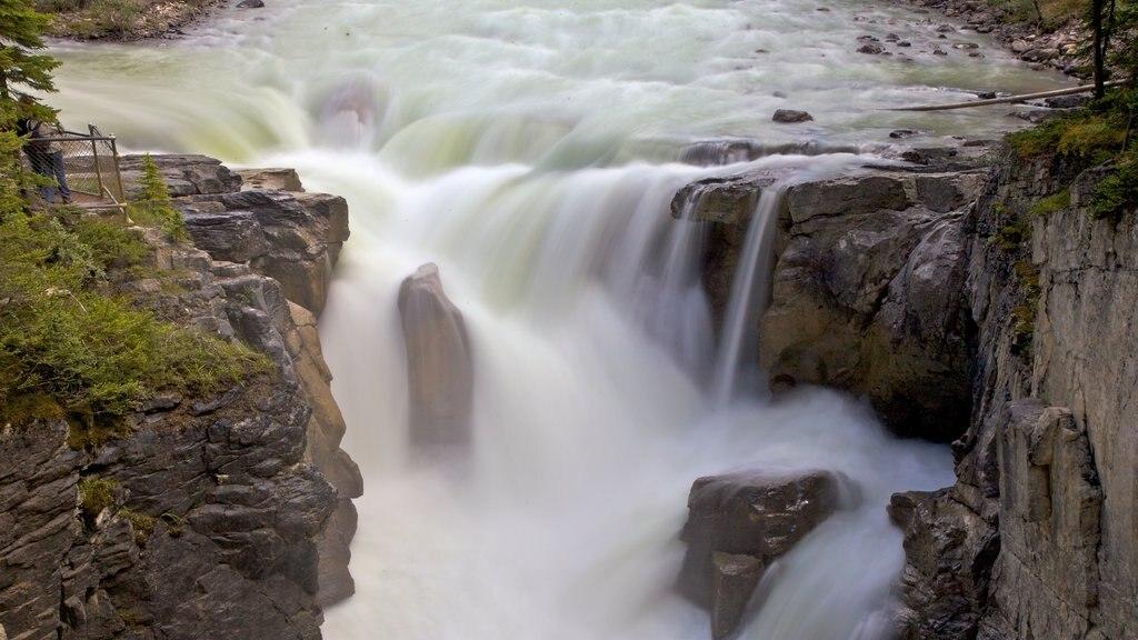 Sunwapta Falls showing landscape views and a cascade