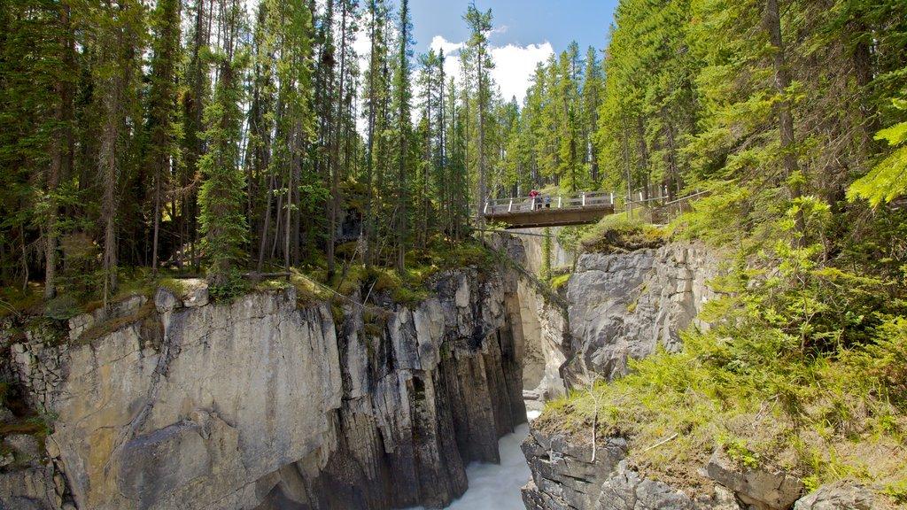 Sunwapta Falls featuring landscape views, a bridge and forests