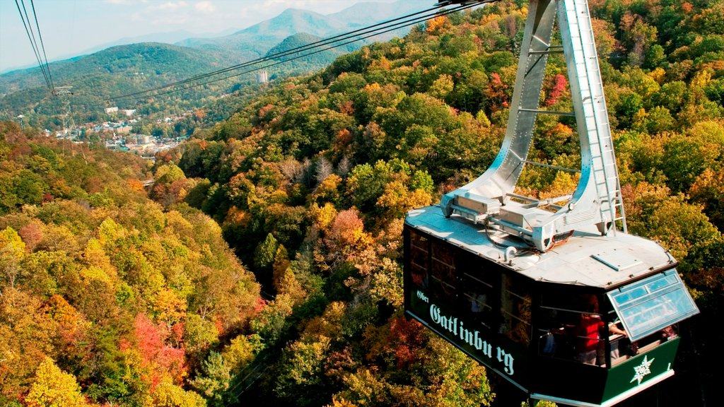 Gatlinburg which includes a gondola, forests and fall colors