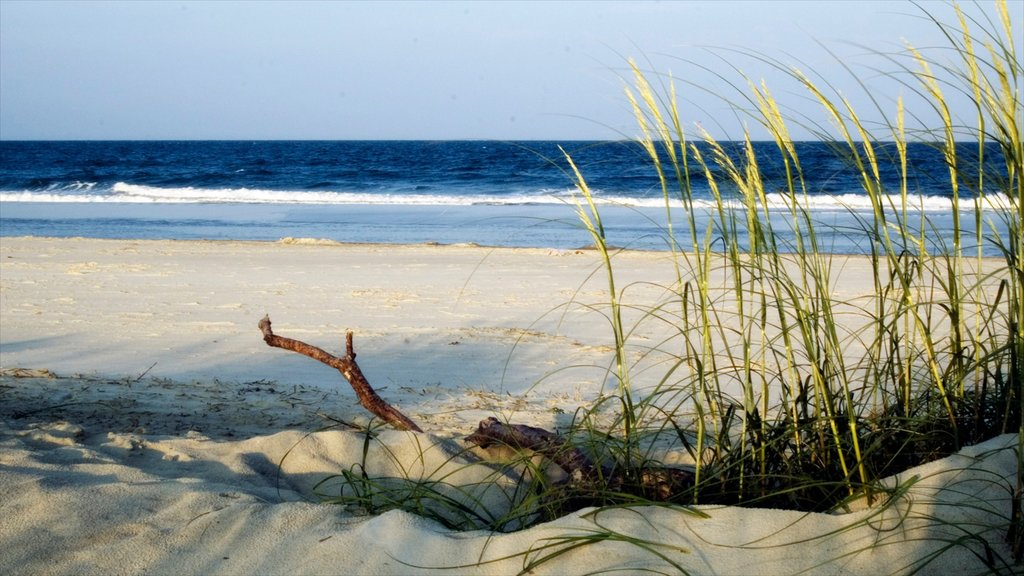 Tybee Island showing general coastal views, tropical scenes and a beach