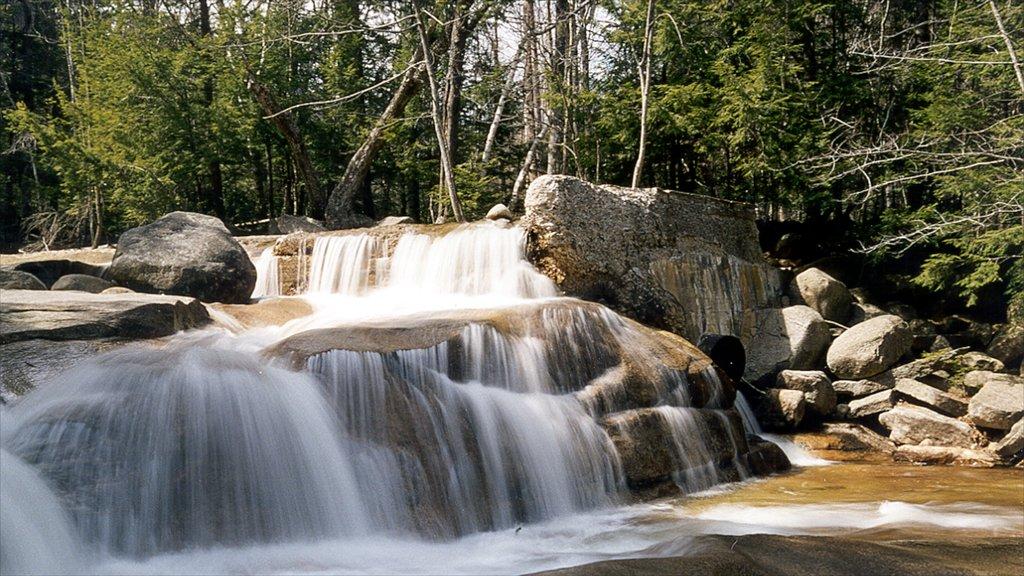 North Conway mostrando escenas forestales, vistas de paisajes y una cascada