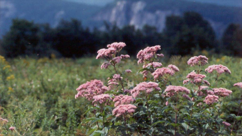 North Conway ofreciendo flores y flores silvestres