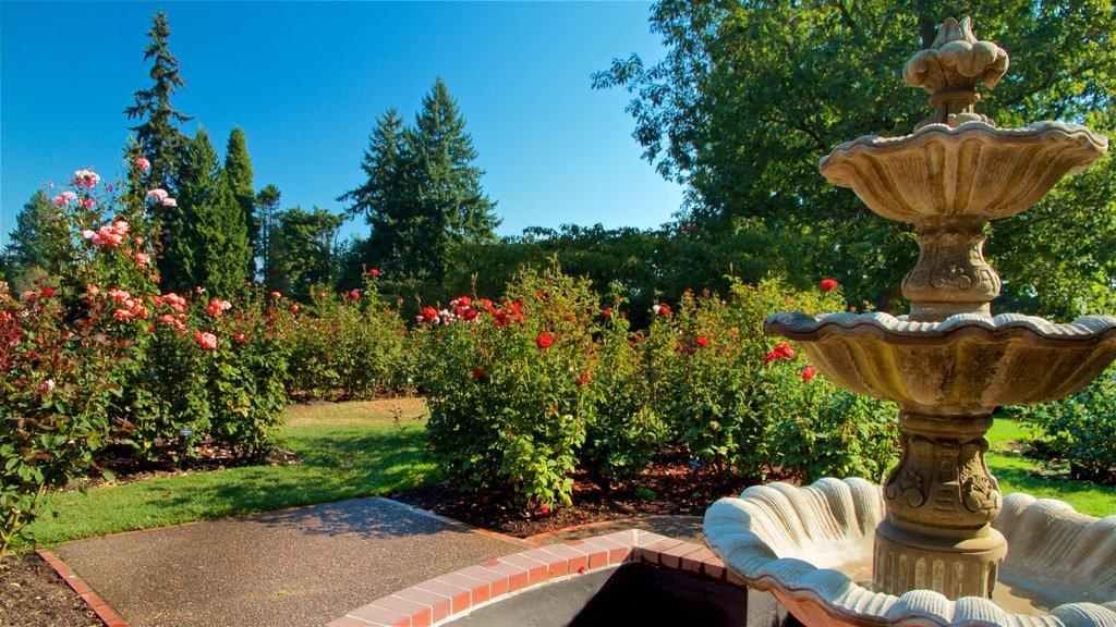 International Rose Test Garden showing a fountain, flowers and a garden