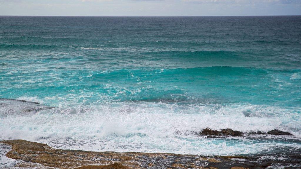 Tamarama Beach featuring general coastal views