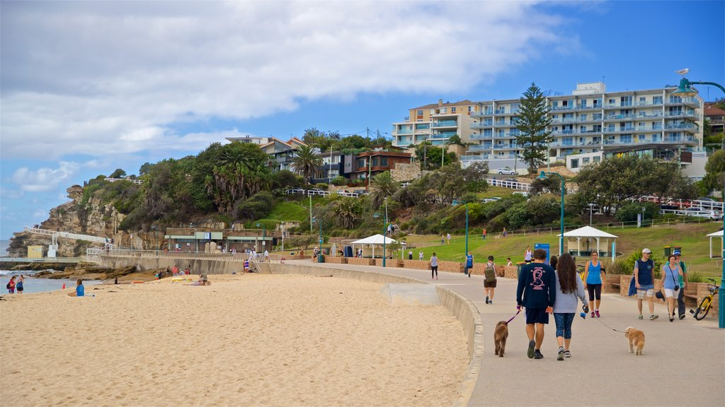 Bronte Beach showing cuddly or friendly animals, hiking or walking and a sandy beach