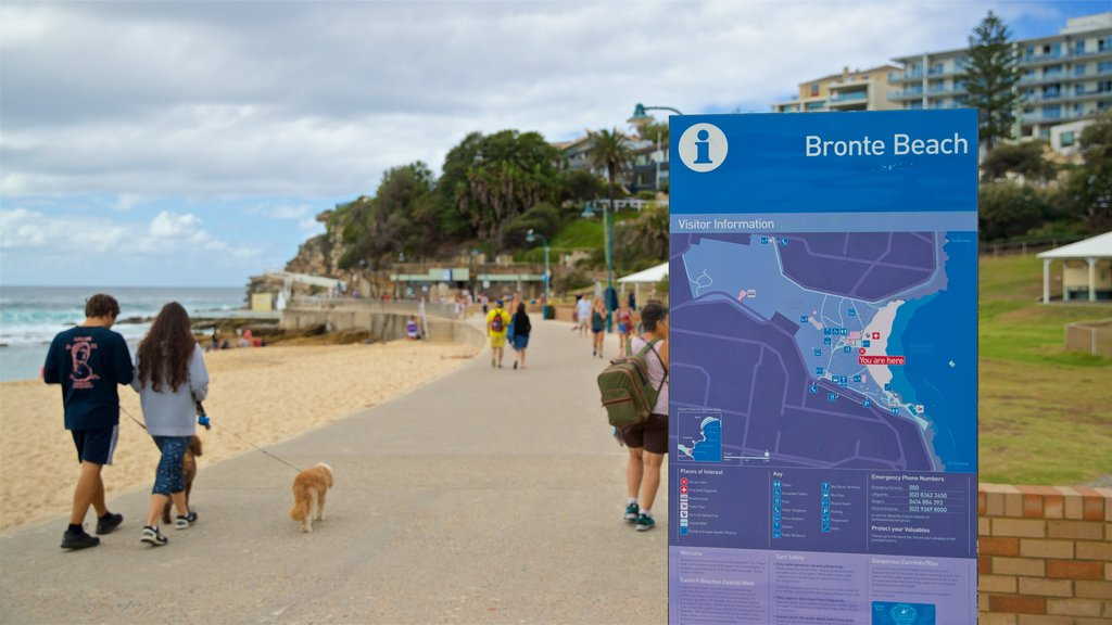 Bronte Beach which includes cuddly or friendly animals, signage and hiking or walking