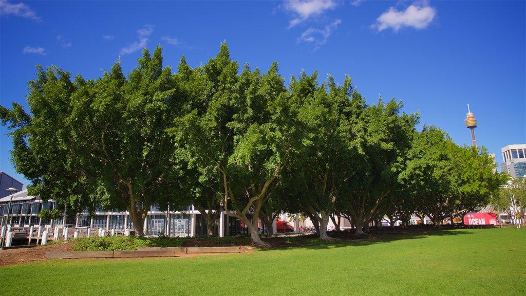 Sydney showing a park