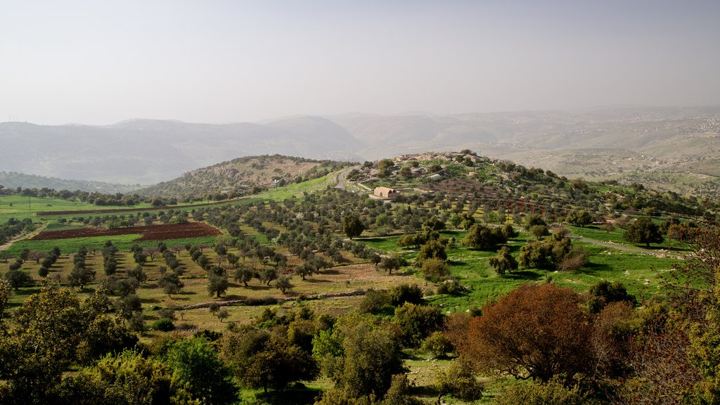 Tell Mar Elias showing tranquil scenes and landscape views