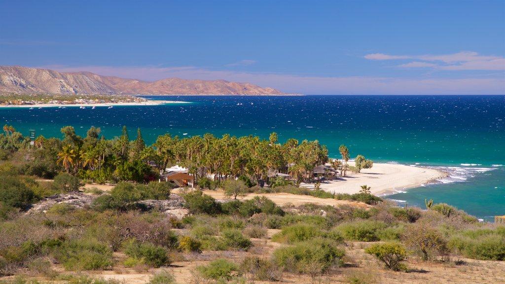 Los Barriles showing general coastal views and landscape views