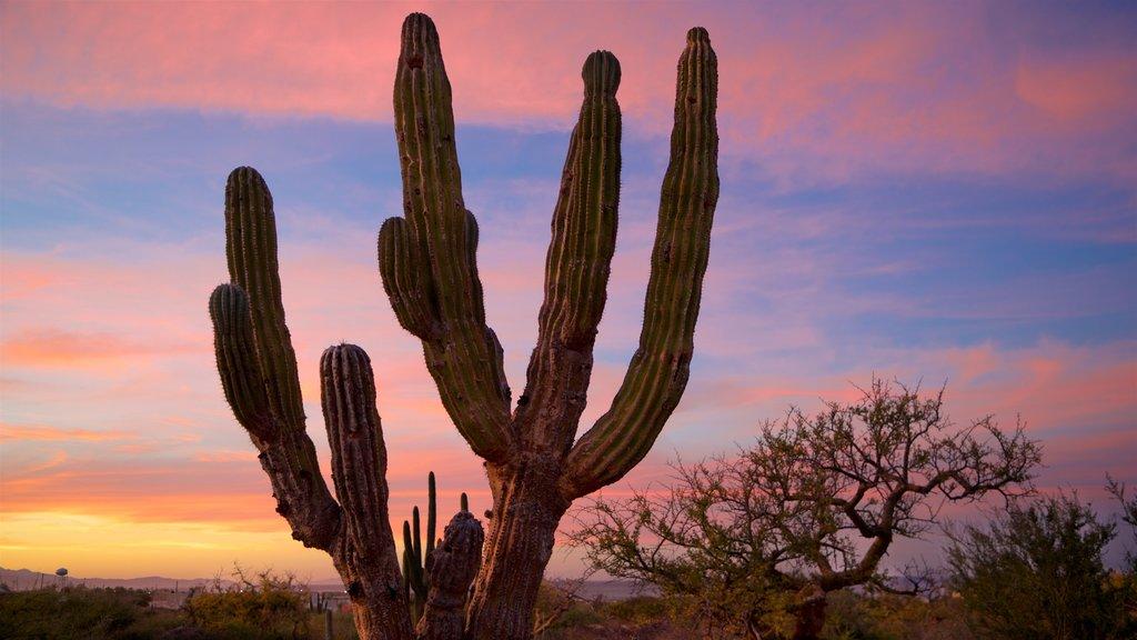 La Ribera showing a sunset and desert views