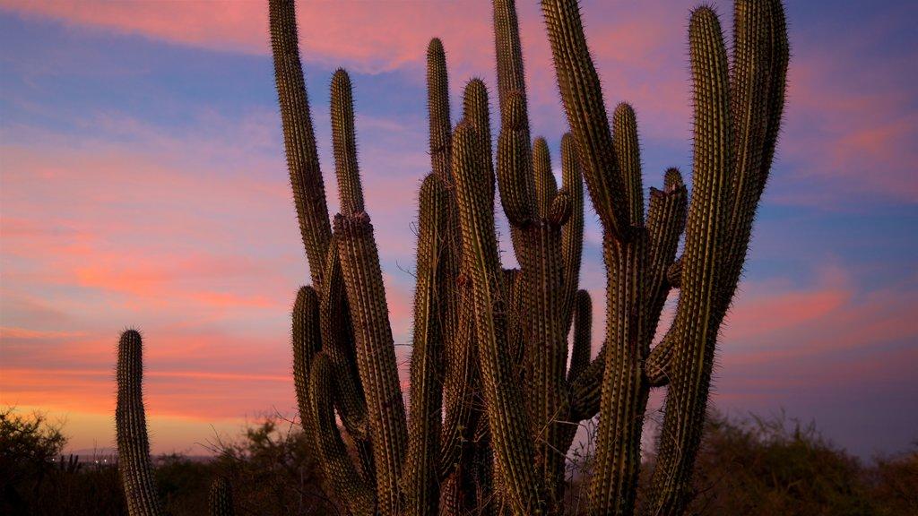 La Ribera featuring desert views and a sunset