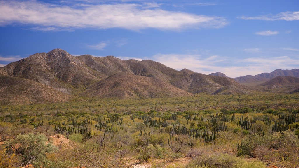 Cabo Pulmo showing desert views, landscape views and tranquil scenes