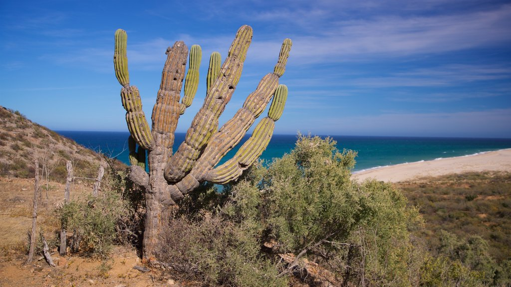 Cabo Pulmo featuring desert views and general coastal views