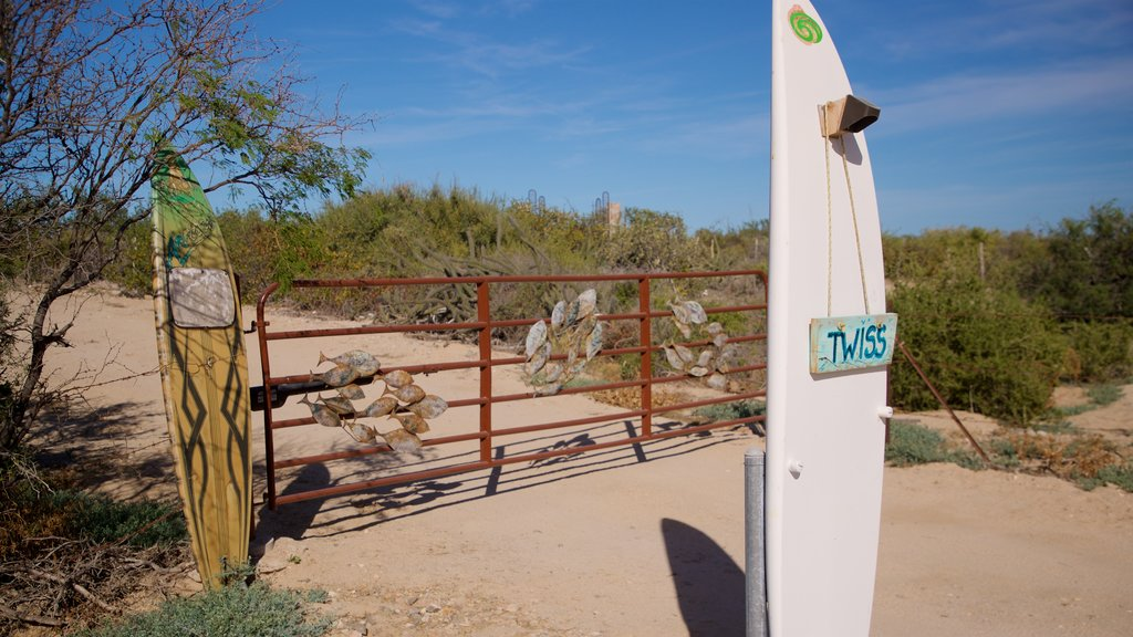 Cabo Pulmo showing outdoor art and tranquil scenes