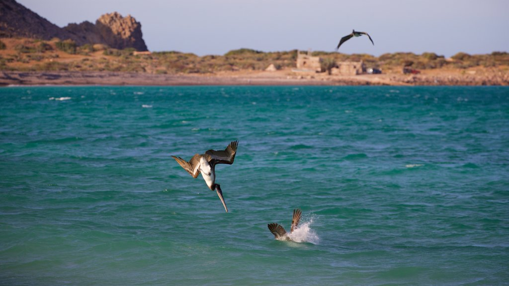 Cabo Pulmo featuring bird life and general coastal views