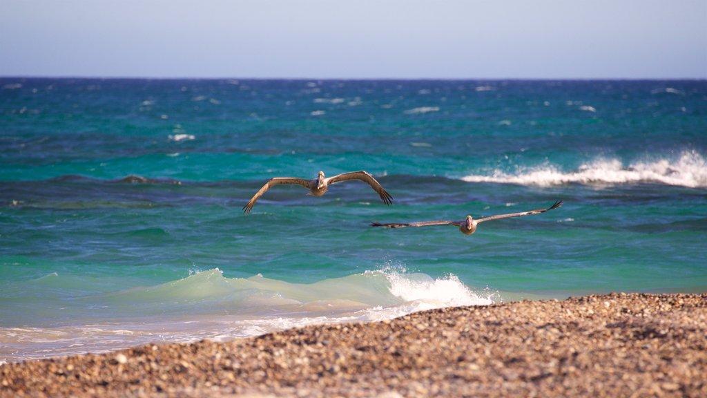 Cabo Pulmo showing bird life and general coastal views