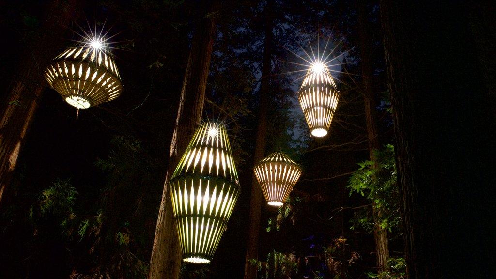 Redwoods Whakarewarewa Forest que incluye escenas nocturnas