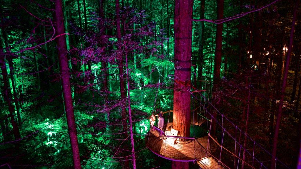 Redwoods Whakarewarewa Forest que incluye escenas nocturnas, bosques y un puente colgante o pasarela en las copas de los árboles