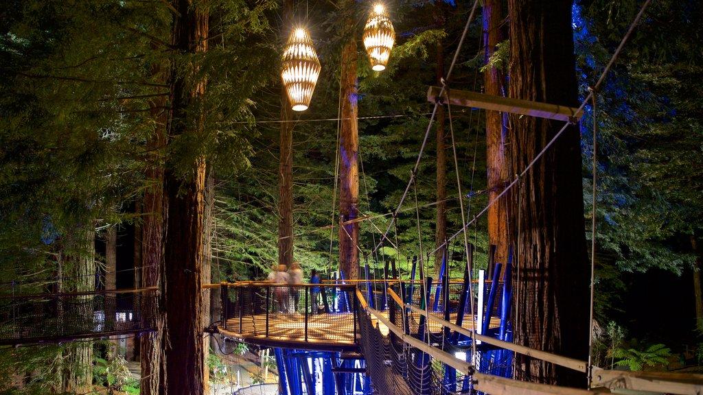 Redwoods Whakarewarewa Forest mostrando escenas nocturnas, un puente colgante o pasarela en las copas de los árboles y bosques
