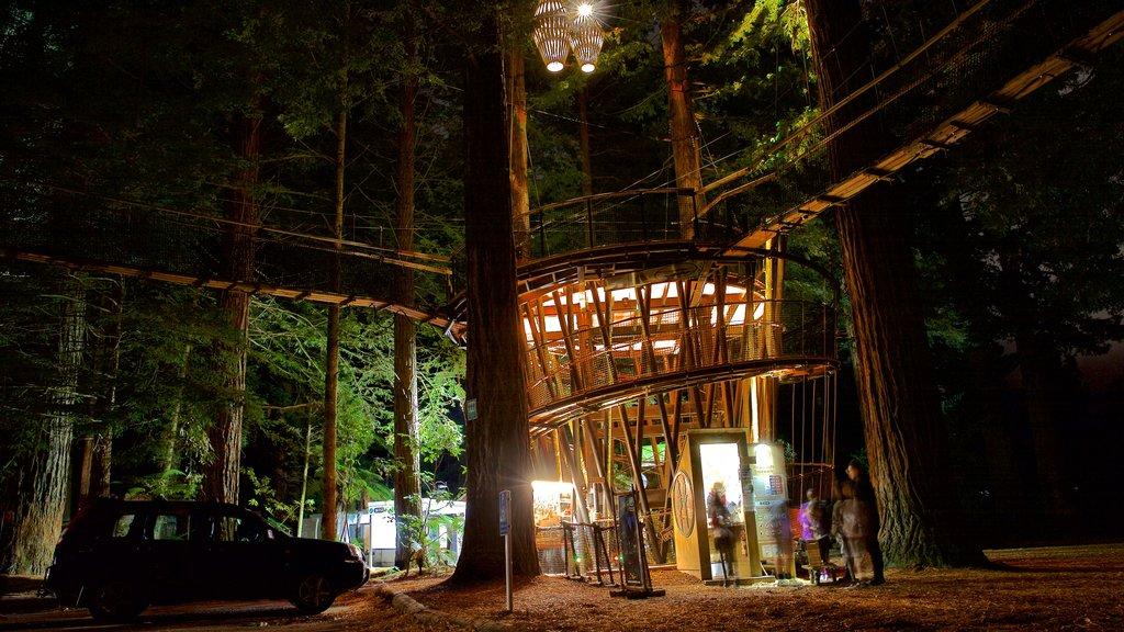 Redwoods Whakarewarewa Forest mostrando escenas nocturnas y bosques