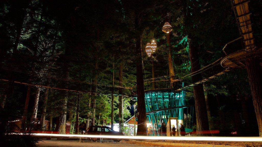 Redwoods Whakarewarewa Forest que incluye escenas nocturnas y bosques