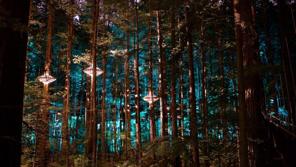 Redwoods Whakarewarewa Forest ofreciendo bosques y escenas nocturnas