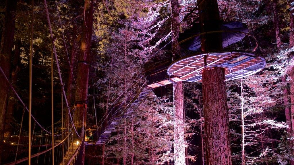 Redwoods Whakarewarewa Forest que incluye bosques y escenas nocturnas