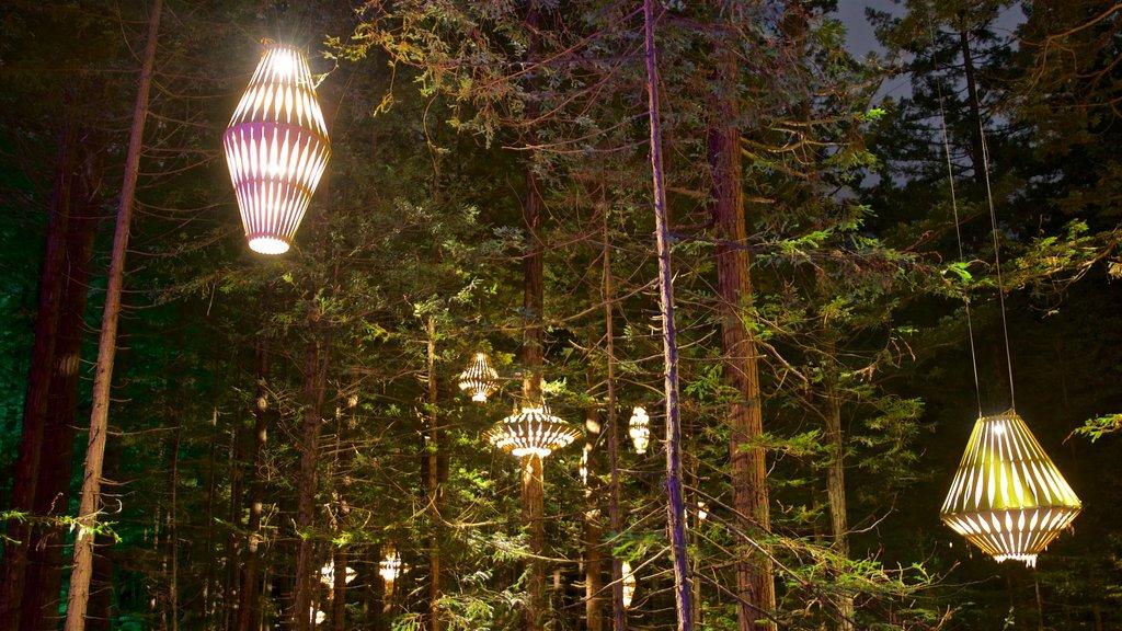 Redwoods Whakarewarewa Forest mostrando escenas forestales y escenas nocturnas