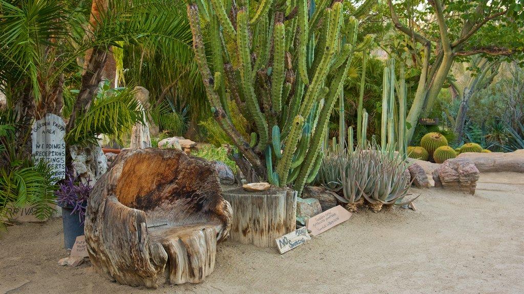 Moorten Botanical Garden and Cactarium which includes a garden and desert views