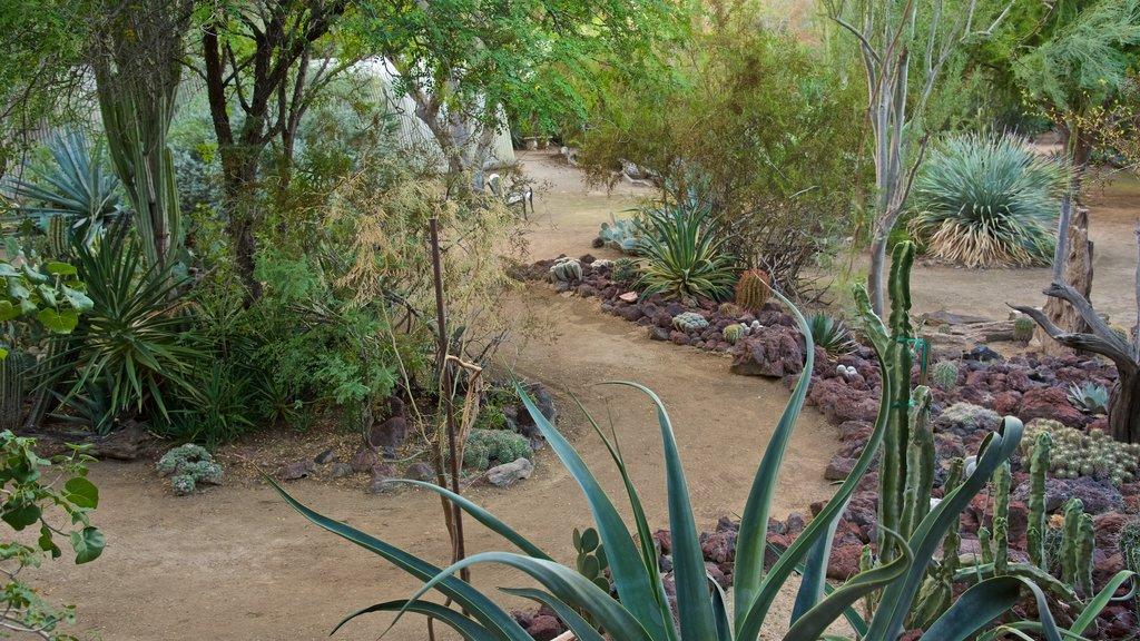 Moorten Botanical Garden and Cactarium which includes a garden
