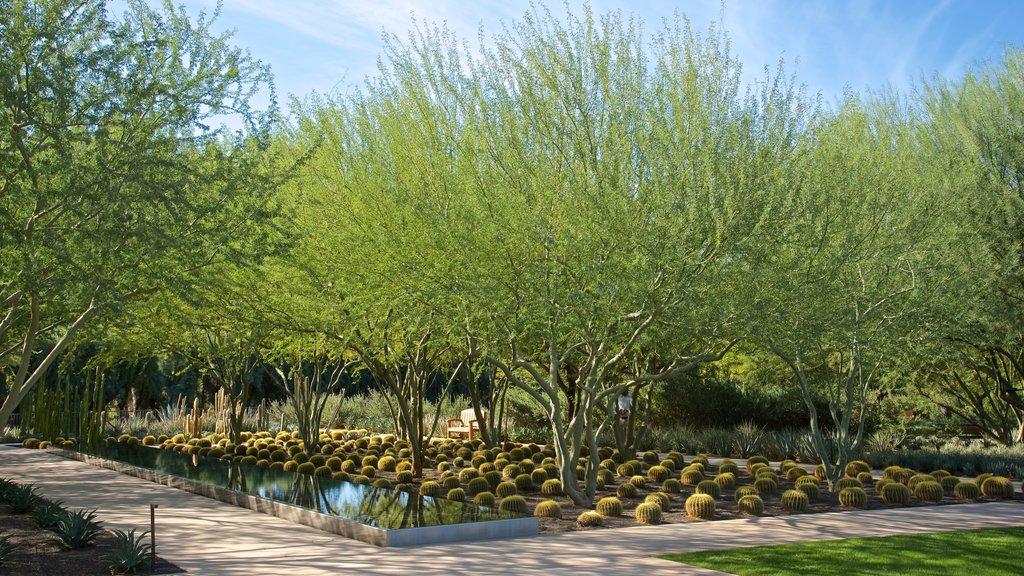 Sunnylands Center and Gardens featuring a garden
