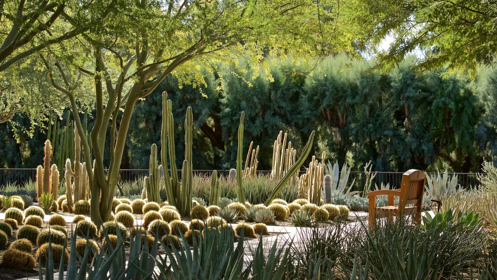 Sunnylands Center and Gardens showing a garden