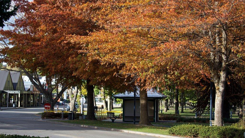Hanmer mostrando un jardín y los colores del otoño