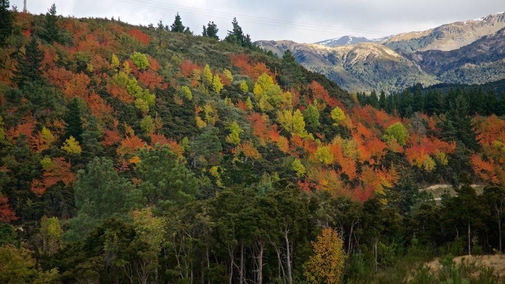 Hanmer mostrando vistas de paisajes, escenas forestales y escenas tranquilas