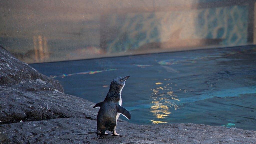 International Antarctic Centre featuring marine life