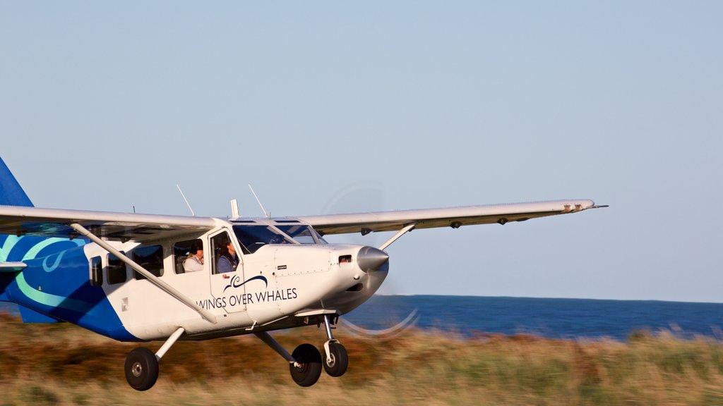 Kaikoura featuring an aircraft