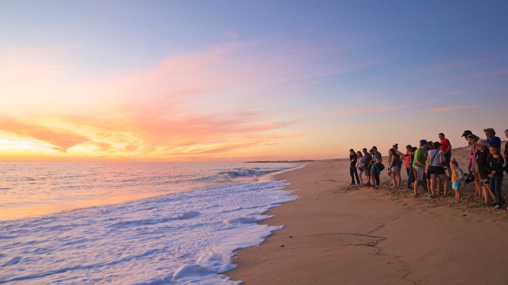 Todos Santos showing landscape views, a sunset and a beach
