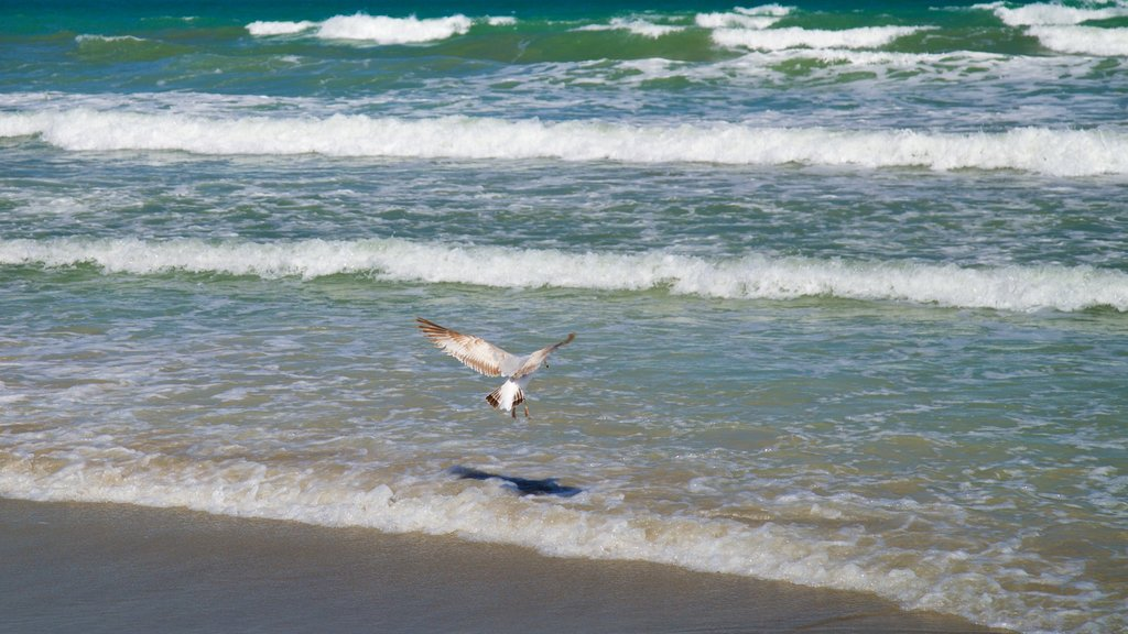 Cocoa Beach showing general coastal views, a sandy beach and bird life
