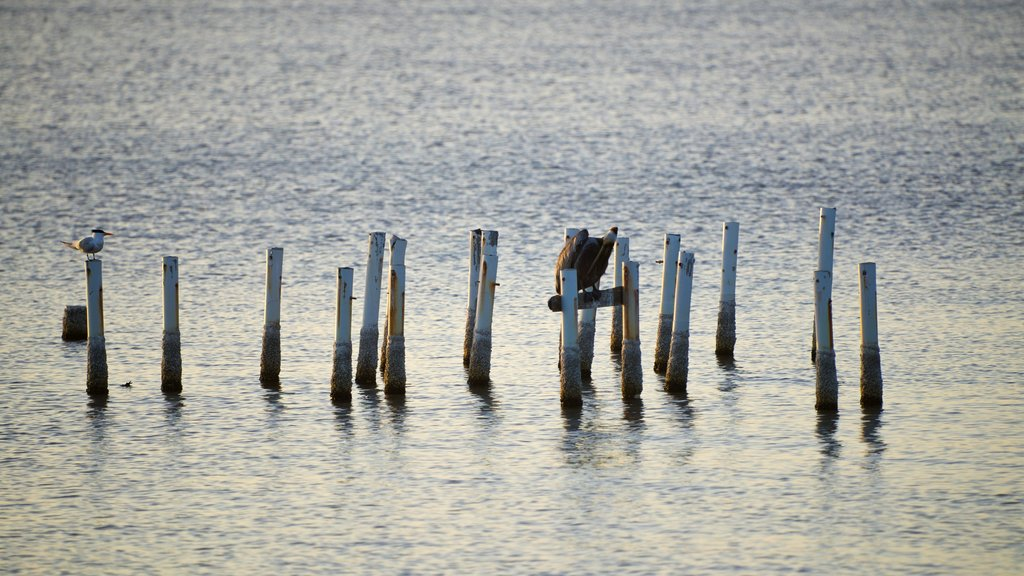 Melbourne Beach featuring general coastal views and bird life