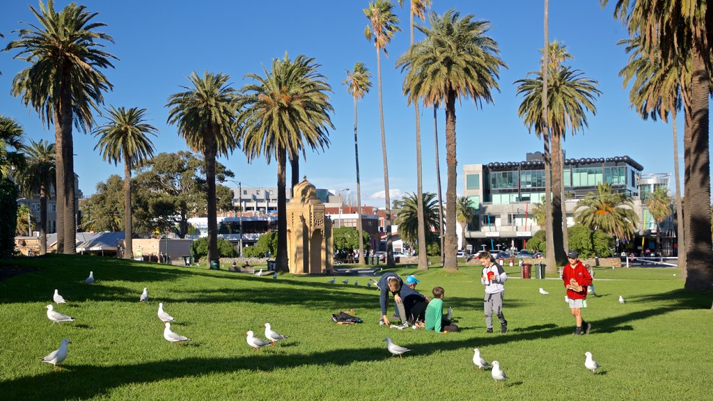 St Kilda showing bird life and a park as well as a family