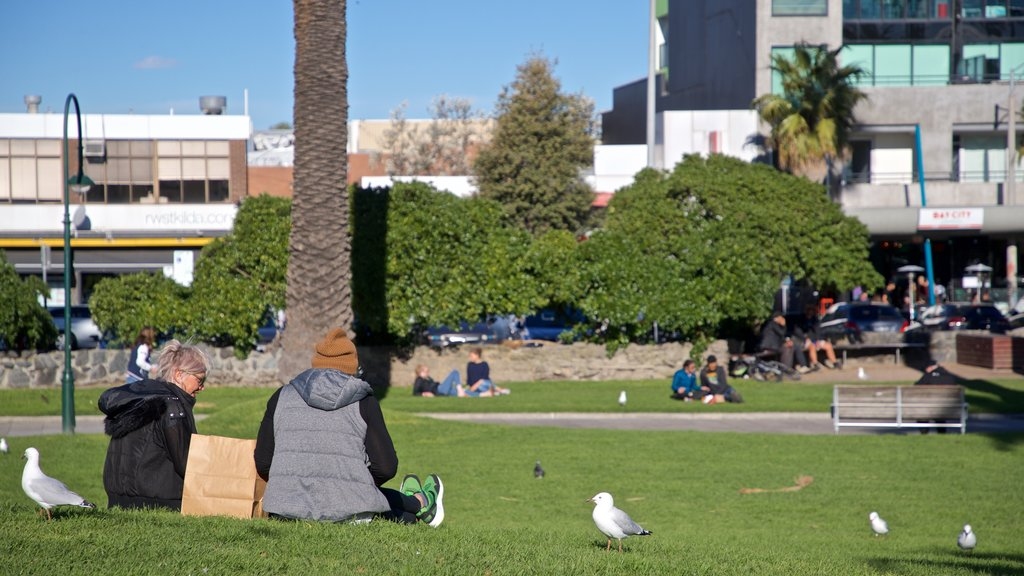 St Kilda showing a park and bird life as well as a couple