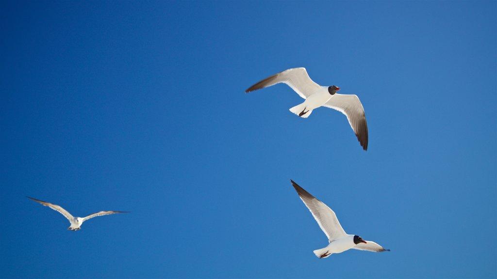 St. Pete Beach showing bird life