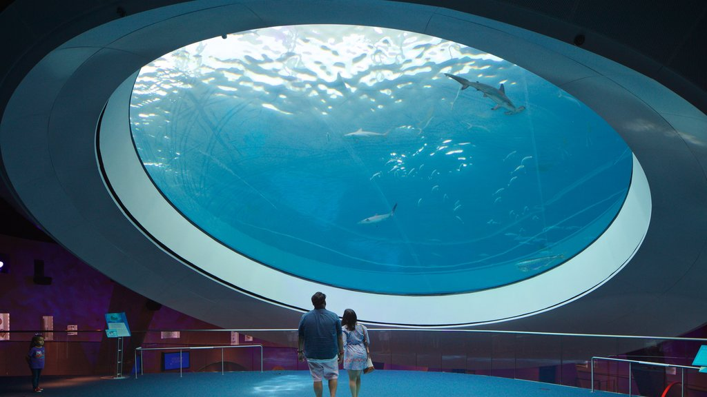 Miami Museum of Science and Space Transit Planetarium showing marine life and interior views as well as a couple