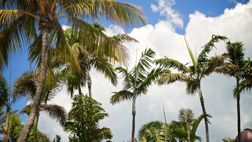 Ocean Drive which includes tropical scenes