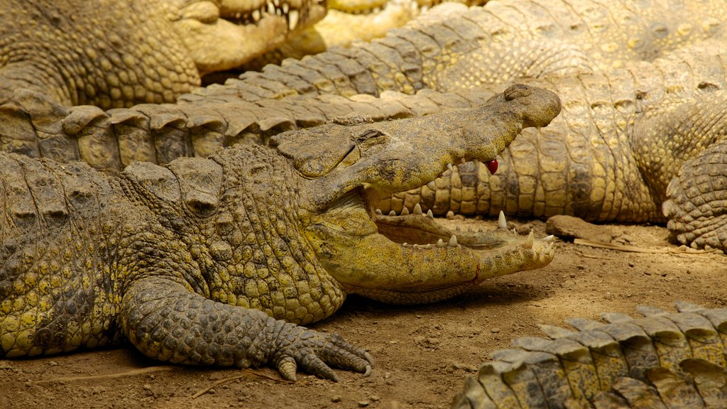 Crococun Zoo which includes dangerous animals and zoo animals