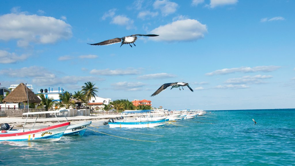 Puerto Morelos which includes tropical scenes, general coastal views and boating