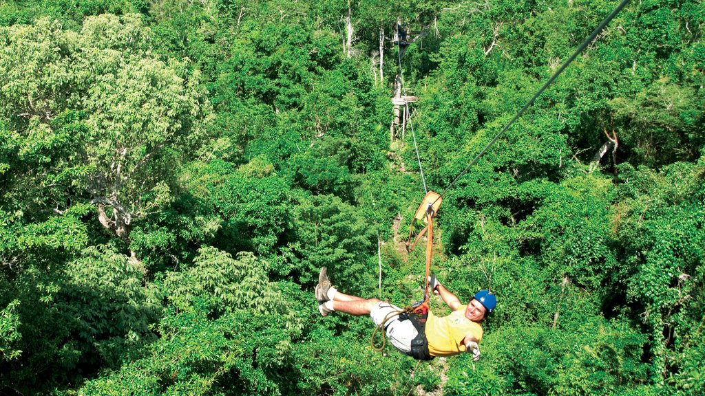 Puerto Morelos which includes forests and zip lining as well as an individual male