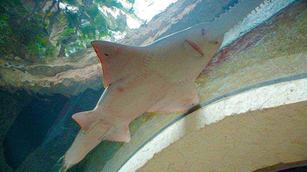 Dallas World Aquarium which includes marine life and interior views