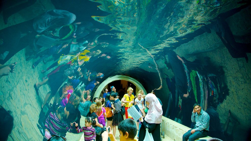 Dallas World Aquarium featuring interior views and marine life as well as a large group of people