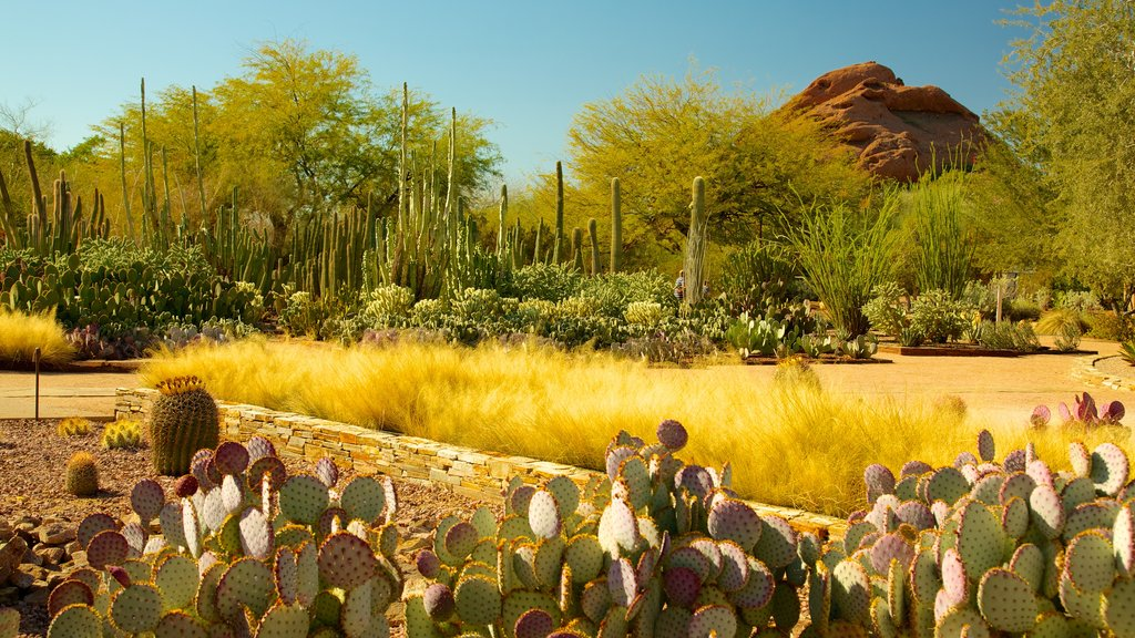 Desert Botanical Garden featuring desert views